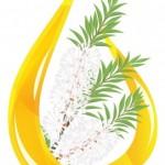 pflanze teebaumöl